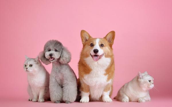 Do I need pet insurance?
