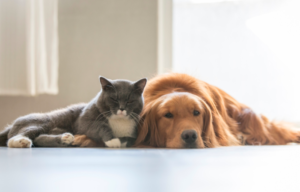 Best and cheapest pet insurance