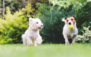 What is lifetime pet insurance?