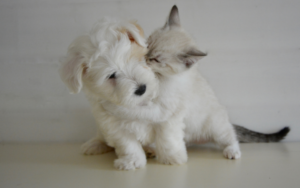 maximum benefit pet insurance