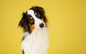 Accident only pet insurance explained