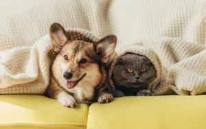 the best lifetime pet insurance