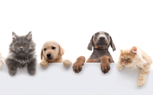 What are the different types of pet insurance?