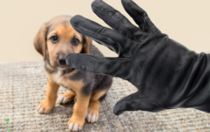 protect your pet from theft
