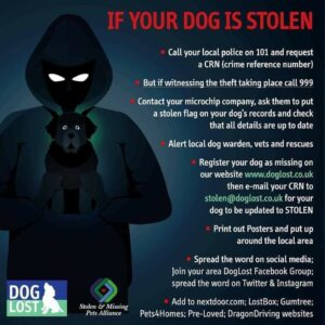what to do if your pet is stolen