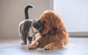 the best maximum benefit pet insurance