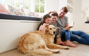 5 reasons why the cheapest pet insurance isnt always the best
