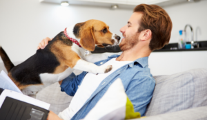 Does pet insurance cover if your pet is lost or stolen?