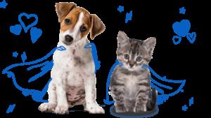 co-op pet insurance review