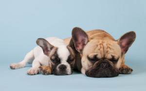 The cheapest dog insurance in the UK