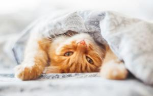 best cat insurance in the UK