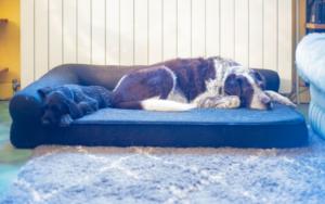 best pet insurance for senior pets
